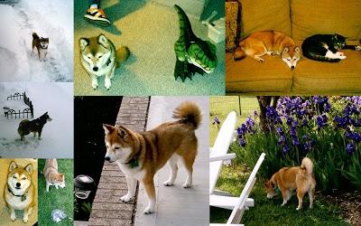 Collage+Sheba.jpg