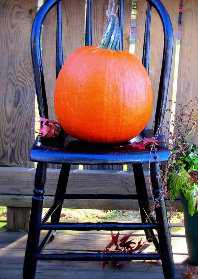 Basic Black & Orange For Halloween