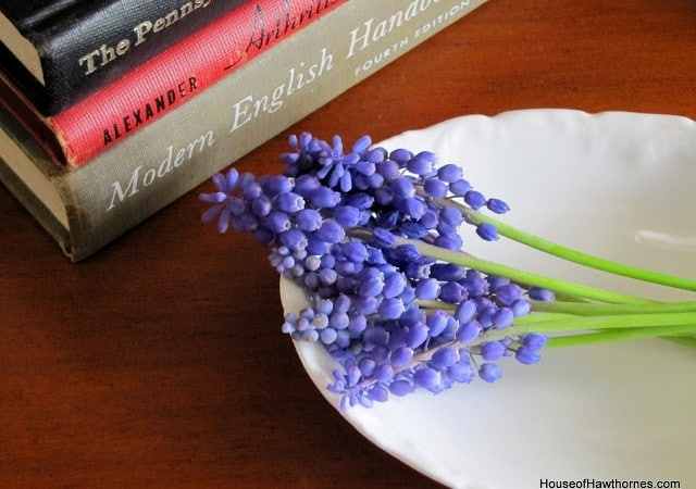 Grape Hyacinth vs The Husband