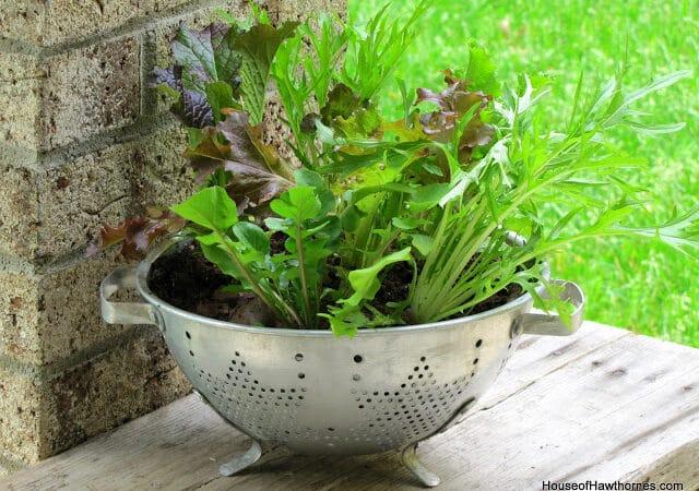 Thrifted Colander Turned Lettuce Planter