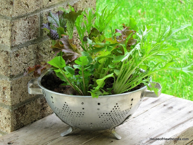 Thrifted Colander Turned Lettuce Planter