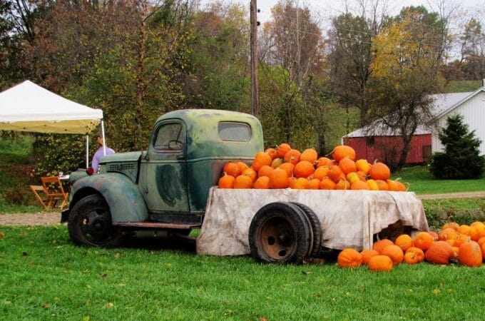 The Rural Society Antique And Garden Show