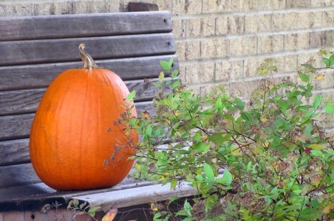 Pam's Pumpkin Palooza