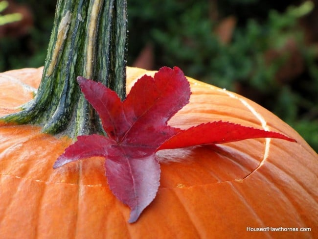 A pumpkin in a birdbath may not be traditional fall decor, but it is a fun and easy way to display your outdoor Jack O Lantern for Halloween