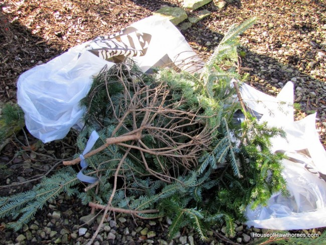 Free source for pine boughs for Christmas decorating