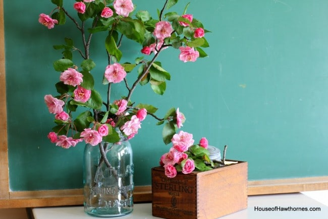 Gorgeous pink crabapple blossoms against a vintage green chalkboard.