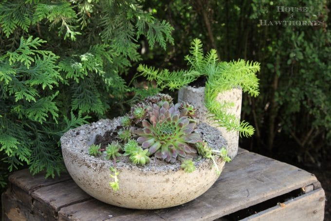 How to make hypertufa planters