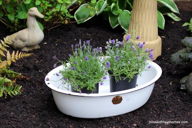 Enamelware basin with purple lavender flowers.