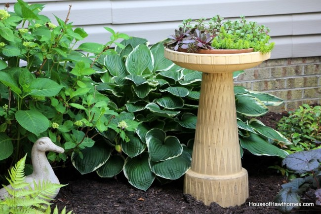 Repurpose a birdbath into a planter for succulents