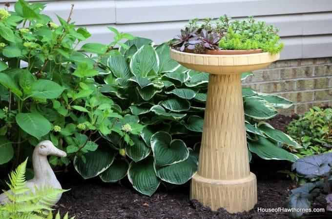 Birdbath or Planter?