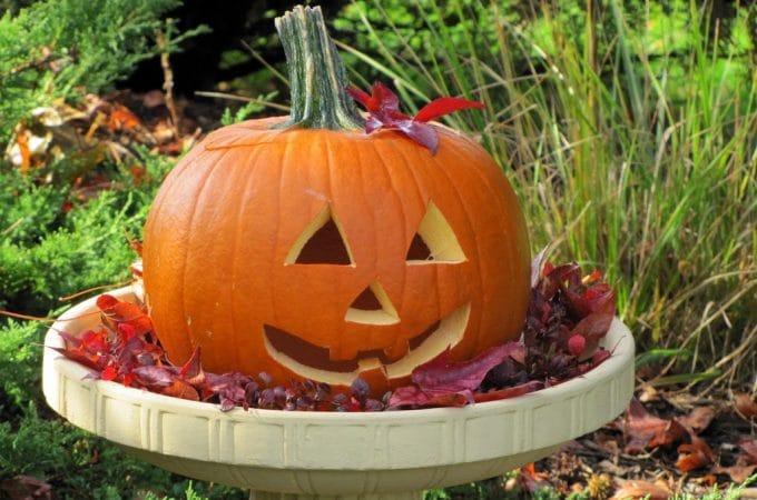 Pumpkin In A Birdbath For Fall