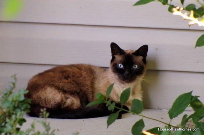 A New Porch Guest