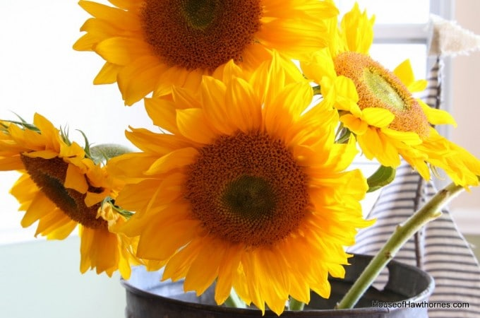Sunflowers For You