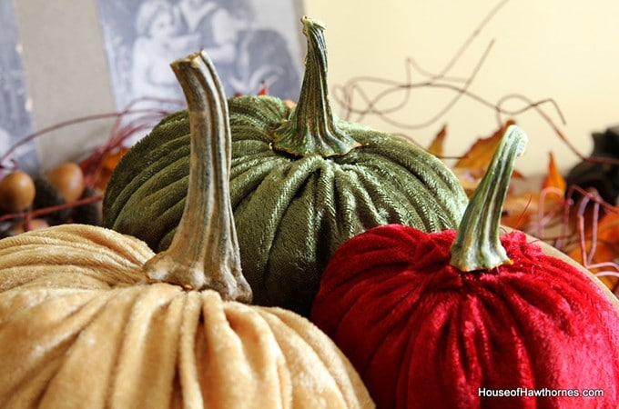 Crushing On Velvet Pumpkins