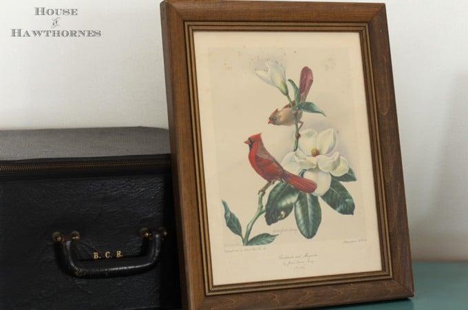 Cardinals-2526-Camellia-3926