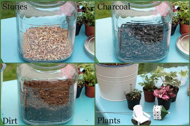 Terrarium tutorial - vintage looking terrarium made out of glass cracker jar from Walmart