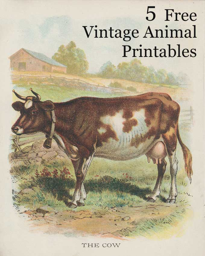 Vintage Animal Printables