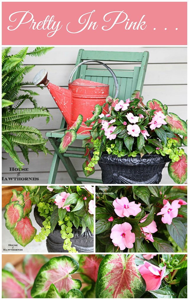 Looking for a SHOW STOPPING flower combo for your containers this year? This impressive low-maintenance combination is sure bet to wow the neighbors.