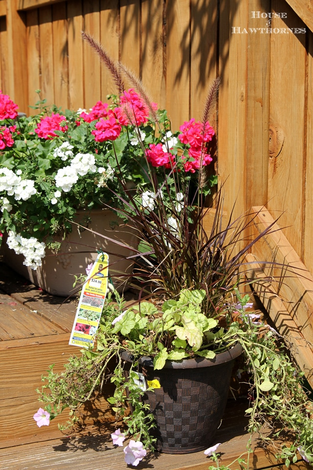 How to extend your summer container gardens into the fall season