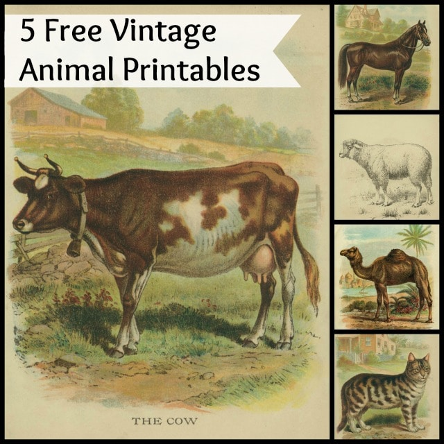 Vintage animal printables for crafts or just printing out and framing