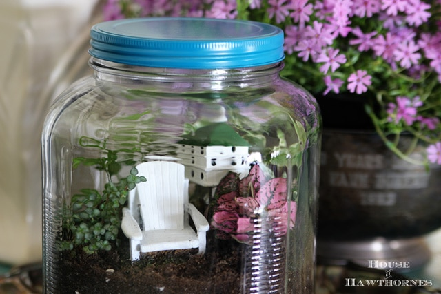 Terrarium tutorial - vintage looking terrarium made out of glass cracker jar from Walmart.