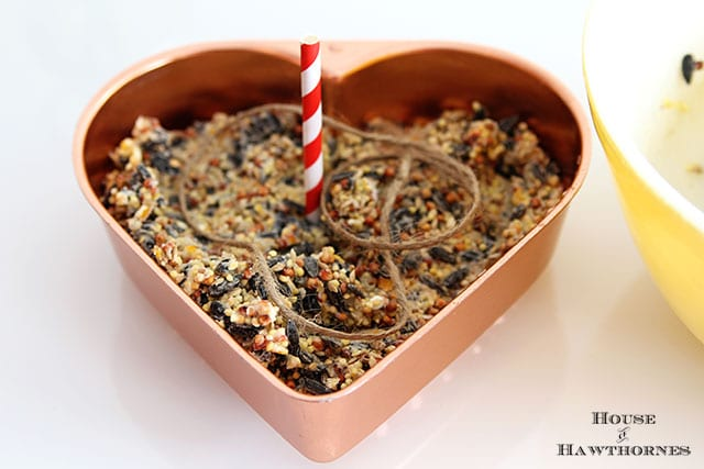 DIY Birdseed Suet Cakes For Our Feathered Friends - these make great hostess and teacher gifts too!