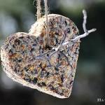 DIY Birdseed Suet Cakes
