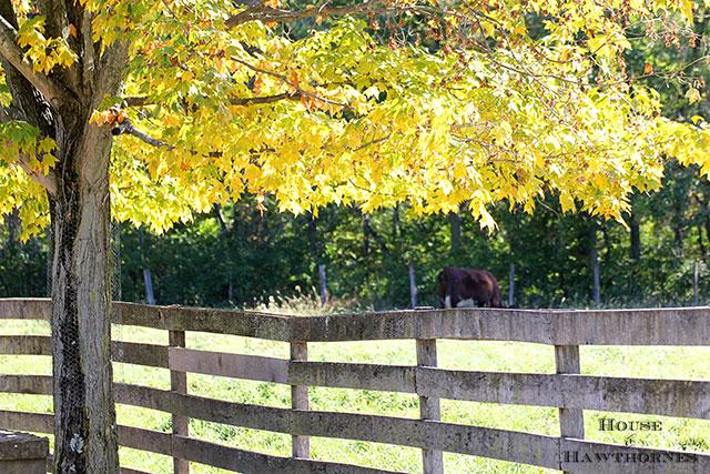 Beautiful Fall Foliage