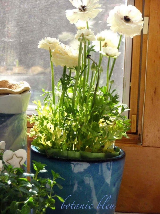 Ten Gardening Posts To Put A Spring In Your Step