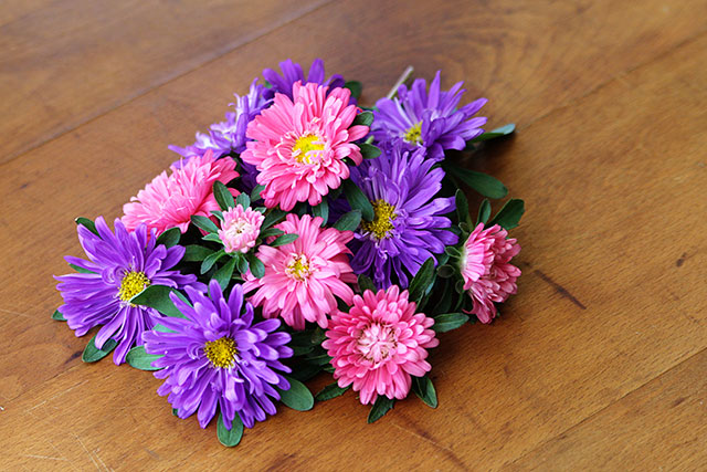 Aster flower heads