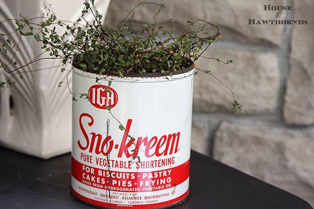Vintage IGA Sno-Kreem shortening tin used as a planter
