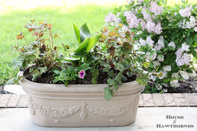 Summer combo planter using Coral Bells, Cana and Supertunia Pretty Much Picasso