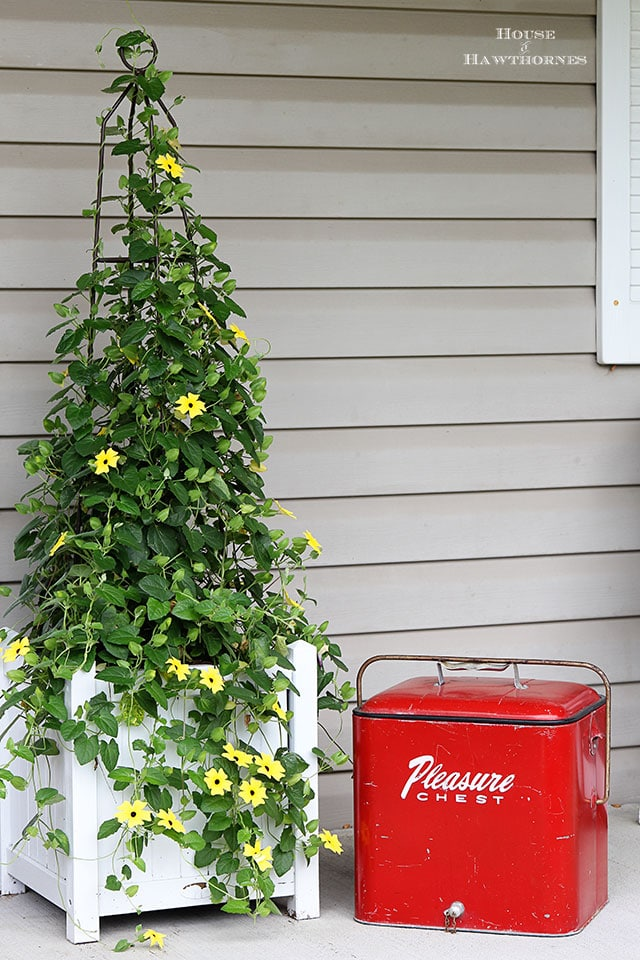 Black-eyed Susan vine and a vintage Pleasure Chest on a fun summer porch with a bit of vintage decor