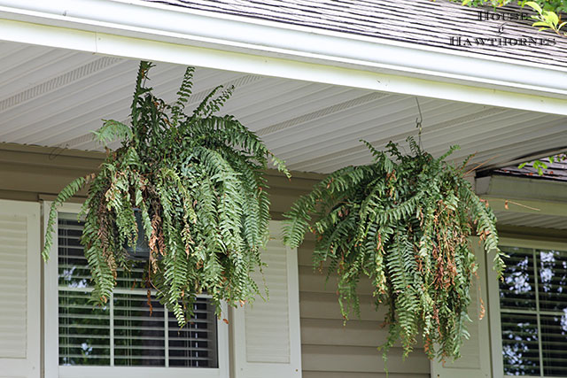 Boston ferns on a fun summer porch with a bit of vintage decor