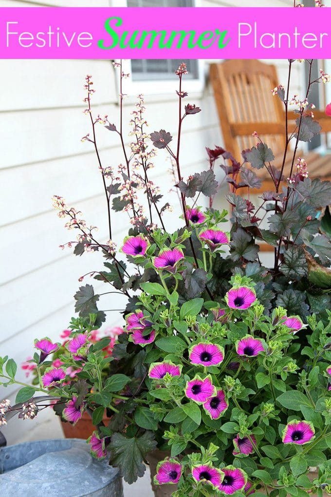 You will love this combination of colorful flowers for your summer planters!
