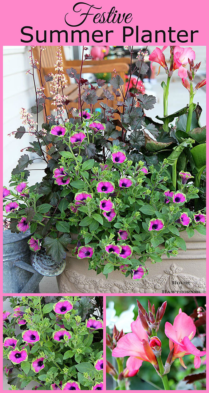 COLORFUL flower combination for your summer porch planter with Tropical Rose Canna, Pretty Much Picasso Supertunia and Harvest Burgundy Coral Bells.