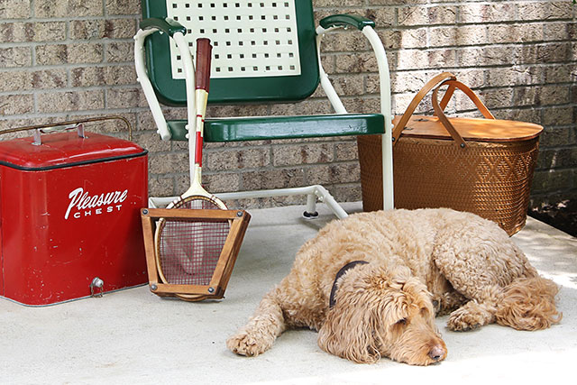 Easy to follow DIY tutorial on how to paint a vintage metal lawn chair. Or any metal chair for that matter! Cute labradoodle not included