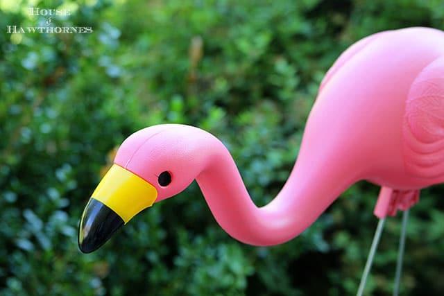 Retiring The Pink Flamingos