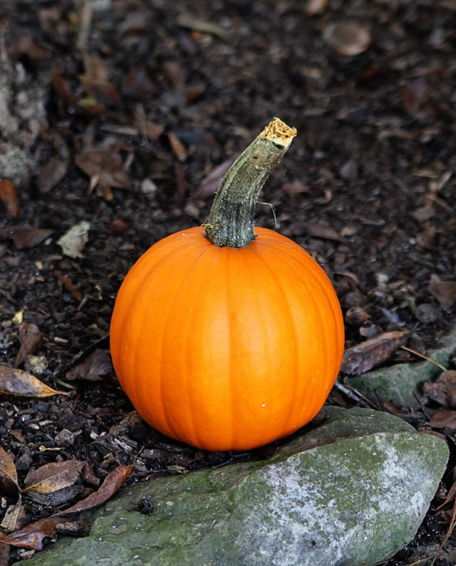 A baby pumpkin and thoughts on summer's end via houseofhawthornes.com