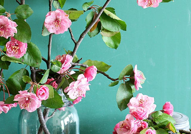 How To Force Flowering Branches Indoors