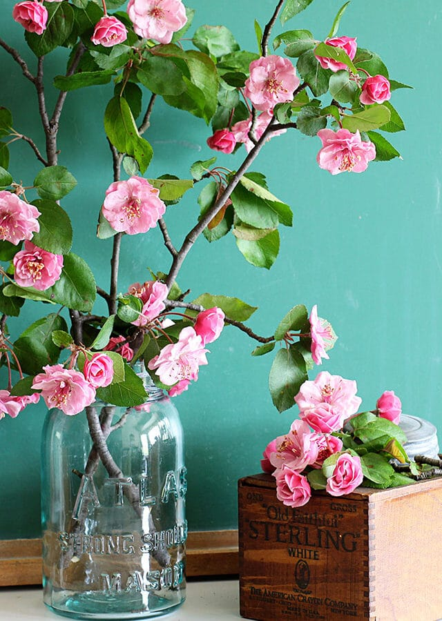 Gorgeous pink crabapple blooms against a vintage green chalkboard.
