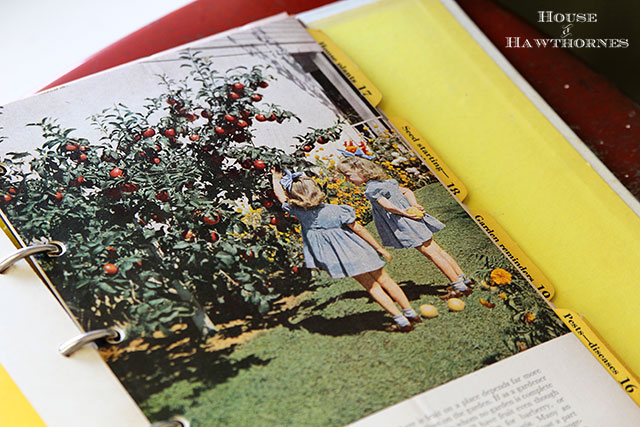 Vintage Better Homes And Gardens Garden Book from 1954 - very cool vintage gardening graphics