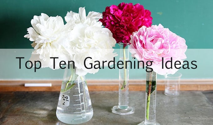 Top Gardening Ideas