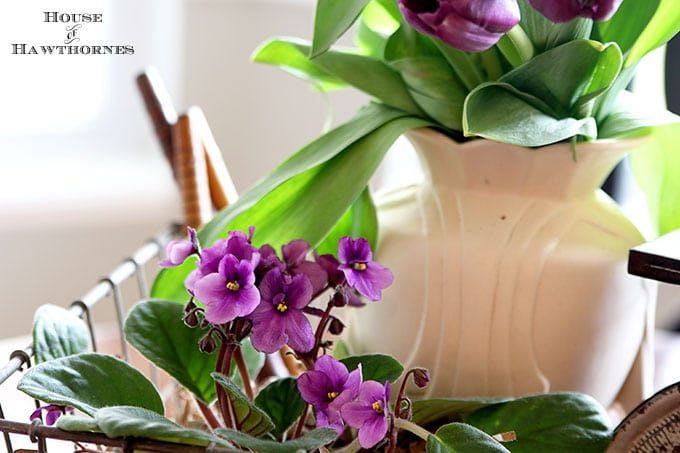 African violet in a rustic farmhouse table centerpiece
