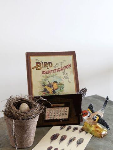 Vintage Spring Bird Vignette