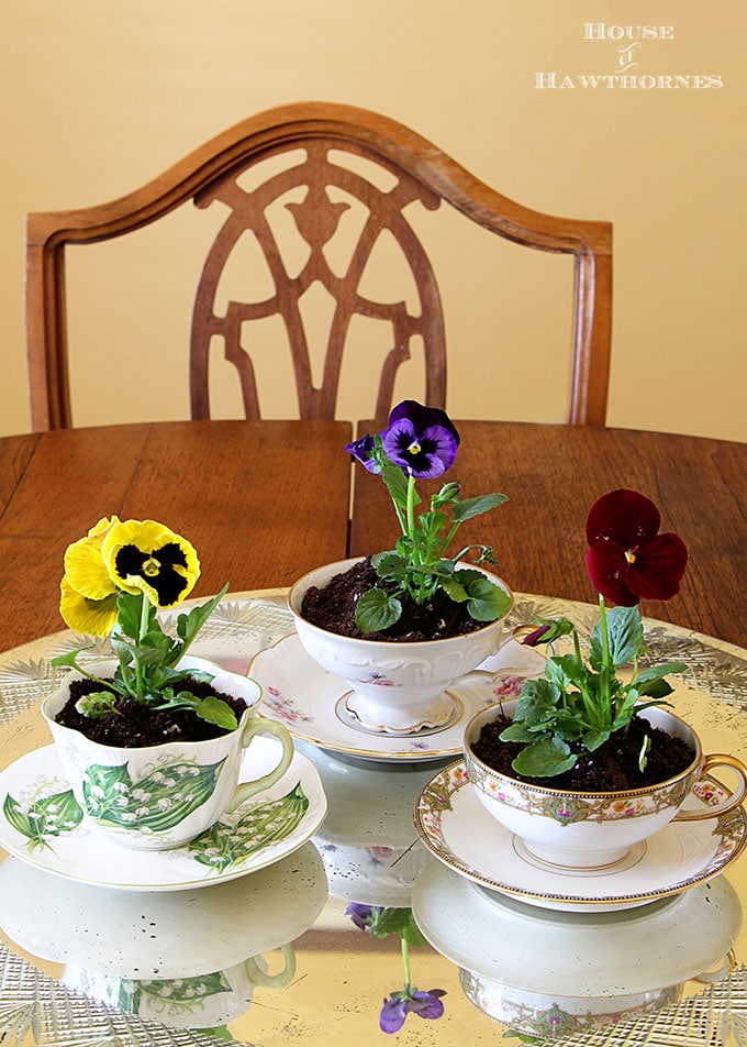 Pansies planted in teacups for spring table decor