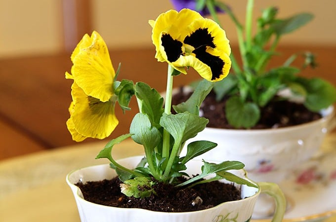 Spring Teacup Table Decorations