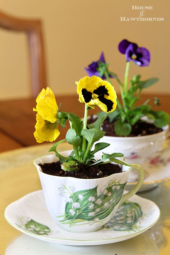 Pansies in teacups for spring decor