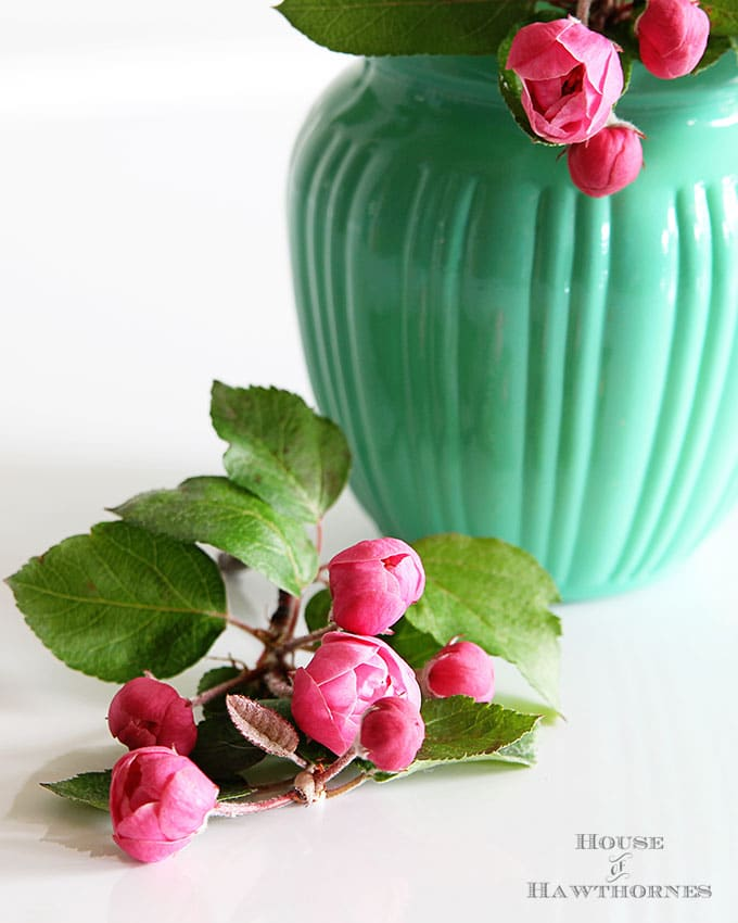 Pink crabapple blossoms in a jadeite green pitcher