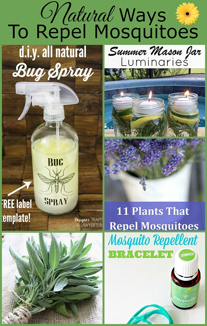 Natural Ways To Repel Mosquitoes Without Bug Spray House